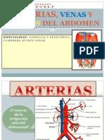 Exp.anatomia Art, Ven, n