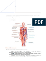 Anatomie vasculaire