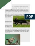Biografia de Aves