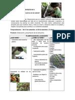 Proyecto cuidado de las plantas