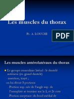 les muscles du thorax