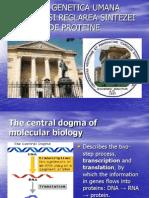 7.Sinteza Proteinelor La Eucariote