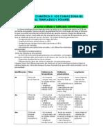 Tema 6 La Diversidad Climatica II, Los Climas Zonales - Copia