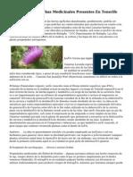 Islas Canarias Hierbas Medicinales Presentes En Tenerife