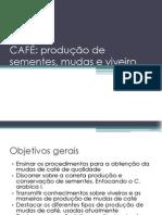 Café- Produção de Mudas e Viveiros.