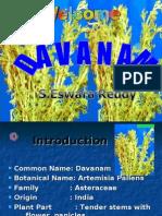 Davanam  Cultivation ppt