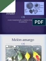 B4 FRUTO.pdf