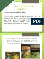 Estudios Con Extractos Vegetales Diapositivas