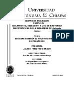 Aislamiento, Seleccion y Uso de Bacterias Diazotroficas de La Rizosfera de Jatropha Curcas