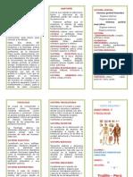 Triptico Anatomía y Fisiologia