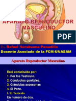 Ap. Reproductor Masculino (H)..pptx