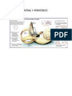 Vertigo central y Periferico ORL