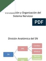Introducción y Organización Del Sistema Nervioso