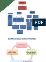 Paralisis Del Tronco Primario