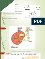 Metabolismo de Cuerpos Cetonicos