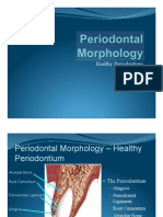 Periodontal Morphology