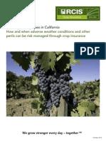 ca wine grapes