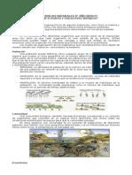 Ciclos Biogeoquímicos e interaccione entre organismos 8° AÑO BÁSICO_Guía 1_Ensayo 2