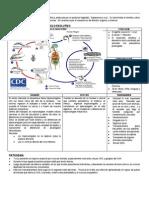 Chagas.pdf