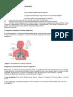 Fisiologia Do Sistema