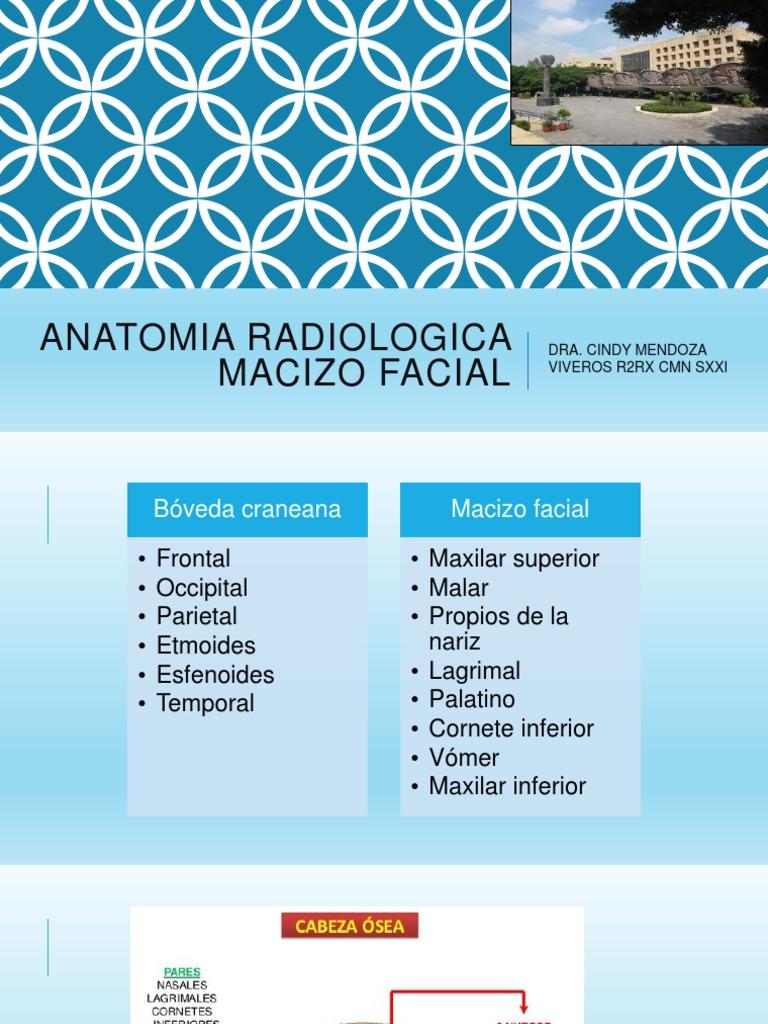 ANATOMIA RADIOLOGICA macizo facial.pptx