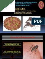 Virus f. Amarilla