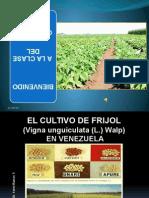 Clase de Cultivo de Frijol (Vigna unguiculata (L.) Walp) en Venezuela