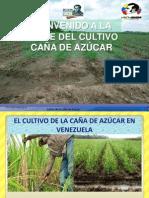 Cultivo de Caña Azúcar (Saccharum officinarum L.) en Venezuela