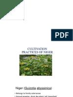 Presentation 1ginger