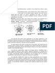 182605964 Movimientos Articulares y Musculos Implicados