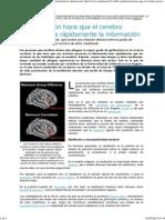 La Meditación Hace Que El Cerebro Procese Más Rápidamente La Información