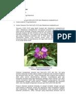 LTM Rekayasa Genetika_Kloning Gen Tanaman
