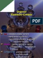 organul-vestibulo-cohlear.ppt