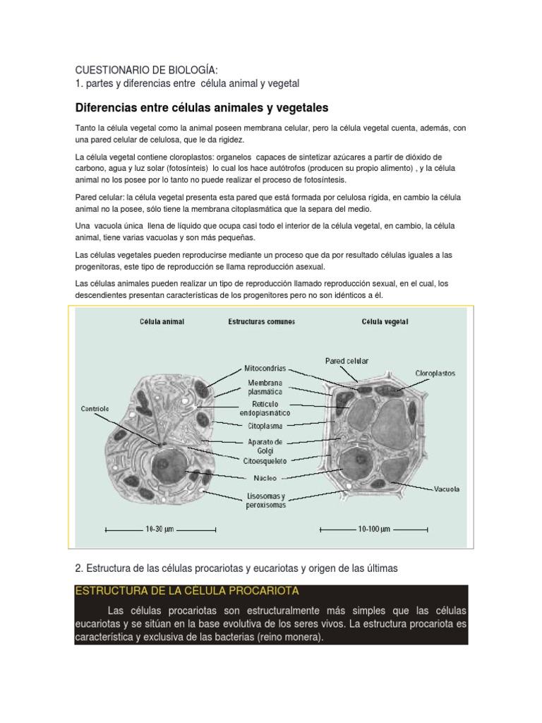Cuestionario De Biología Núcleo Celular Célula Biología