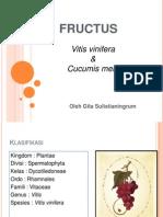 Morfologi Tumbuhan - Fructus