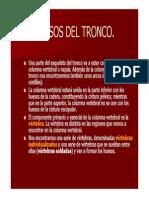 01 - Huesos Del Tronco