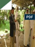 Berkunjung Ke Kebun Hadz Saeed Lootah