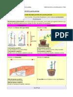 Tema 01 Función de Relación en Las Plantas