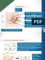ap rep feminino resumo 2014.pptx