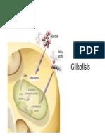2014 metabolisme karbohidrat.pdf