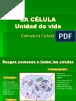 Estructuracelular