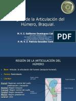 Región de La Articulación Del Húmero, Braquial