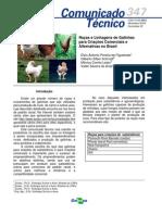 Racas Linhagens Para Criacoes Comerciais Alternativas Brasil 000fzmpevcn02wx5ok0cpoo6auntz8o9