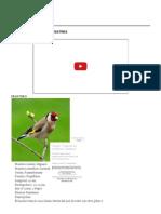 Especies de Pajaros Silvestres
