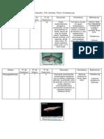 Actinopterygii tabela 1