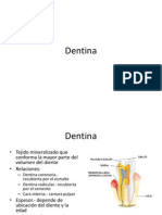 dentina2