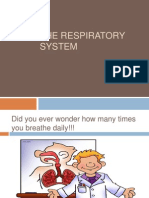 lesson 3-respiratory system