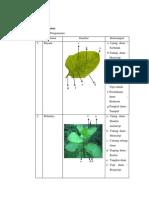 botani daun (2)