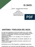 Bazo anatomofisiología