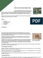 Fezes – Wikipédia, A Enciclopédia Livre